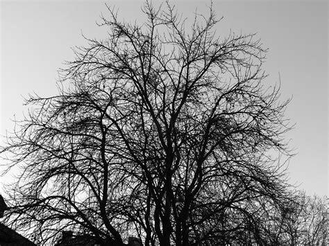Sad Tree By Slejer On Deviantart