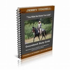 Jerry U0026 39 S Horse Training
