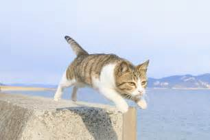 flying cats flying cat book is published in japan the cat fanciers