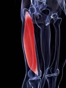 Vastus Lateralis Muscle Pain