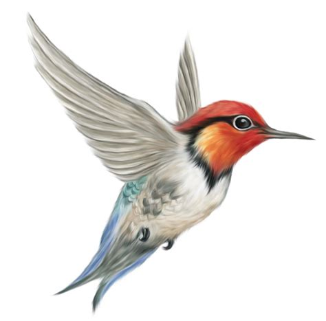 bird png cliparts co