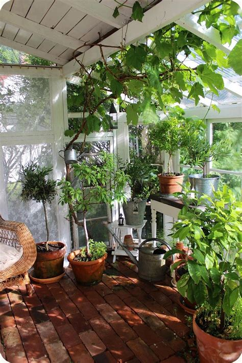 www plant shed 25 best ideas about rustic shed on country