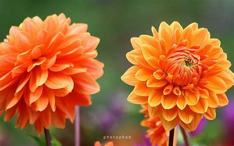 orange  purple flowers  knot