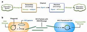 Biological Communication Systems Can Be Represented