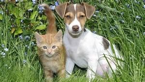 Hunde Größe Berechnen : laut einer studie sind hunde doppelt so schlau wie katzen ~ Themetempest.com Abrechnung