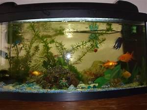 Poisson Aquarium Eau Chaude : vous et l 39 aquariophilie ~ Mglfilm.com Idées de Décoration