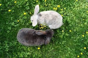 Wie Groß Ist Ein Queensize Bett : was kaninchen alles brauchen artgerechte haltung lieblingsm hre ~ Bigdaddyawards.com Haus und Dekorationen