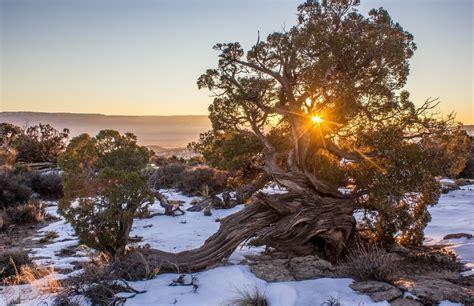 Wood In Nature Photo Contest Winner Blog Viewbugcom