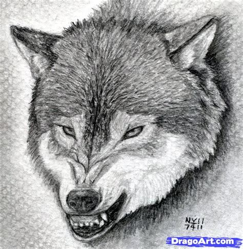 wolf drawing  cool funny