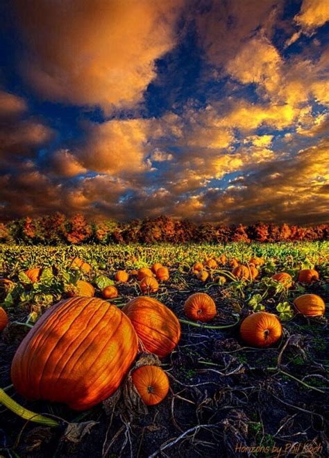 pumpkins and fall pictures pumpkin crossing phil koch fall delights pinterest