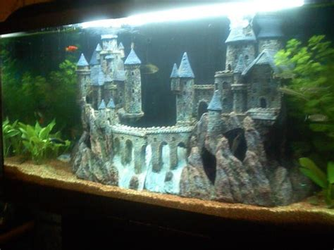 d 233 coration d aquarium pour guppy esth 233 tique
