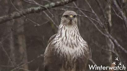 Bbc Giphy Wildlife Earth Gifs Tweet