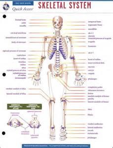 Skeletal System Worksheet Human Body