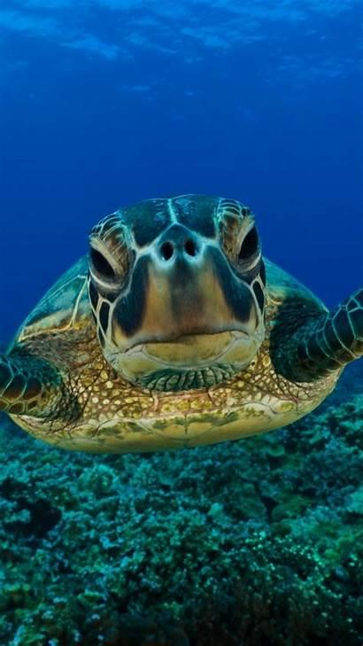 Underwater Turtle Shell Swim Wallpapers 1080 1920