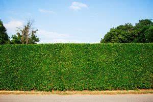 Welche Pflanzen Eignen Sich Als Sichtschutz : sichtschutz pflanzen die gr ne wand 11880 ~ Eleganceandgraceweddings.com Haus und Dekorationen