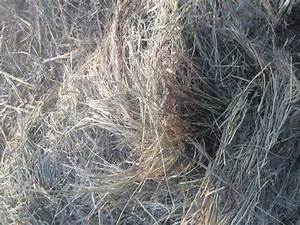 Brome hay round bales - Nex-Tech Classifieds