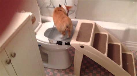 un chien fait ses besoins dans la toilette