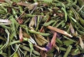 hysope cuisine hysope herbes aromatiques cuisine médiévale conseil