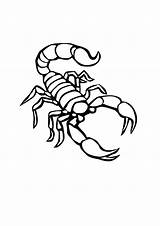 Scorpion Coloring Pages Desert Outline Printable Animal Scorpian Drawing Sheets Animals Drawings Creepy Scorpions Printables Draw Tattoo Bestcoloringpagesforkids Stencil Luxury sketch template