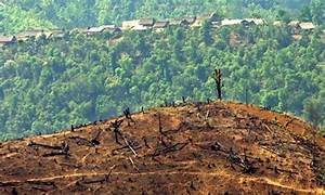 Deforestation in the Amazon | One World Education, Inc.