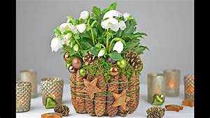 Mit Fotos Dekorieren : diy christrose dekorieren mit fichtenzapfen moos i tischdeko f r weihnachten und winterzeit i ~ Indierocktalk.com Haus und Dekorationen