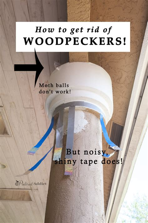 how to get rid of woodpeckers addict