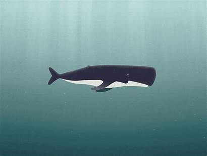 Cycle Whale Animation Fish Loop Background Cool