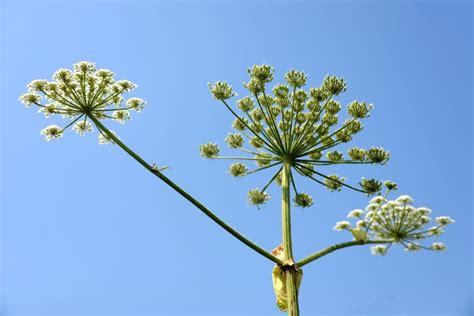 plants    skin irritations