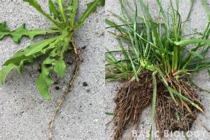 Plant Roots   Basic Biology