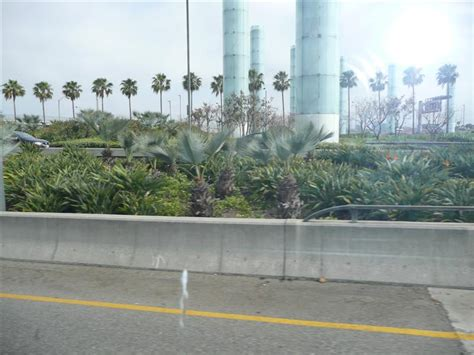 Palms Near Lax (los Angeles Airport)