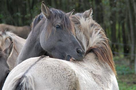 spannende infos ueber pferde die du vielleicht noch