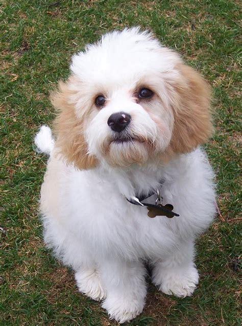 im youve rare dog breeds cute