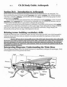 Ch 28 Study Guide  Arthropods