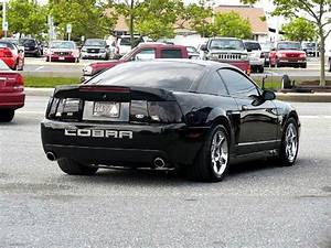 03 = 04 cobra someday I hope   Mustang cars, Mustang cobra, Fox body mustang