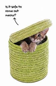 Baby Kitten Care Guide  U00bb Shelter Knowledge Center