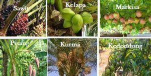 contoh tumbuhan berpembuluh jenis jenisnya materiipacom