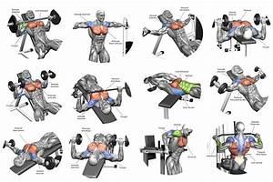 The Perfect Beginner U0026 39 S Bodybuilding Program