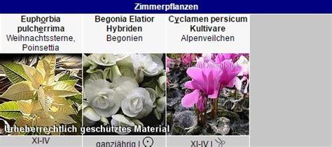 Zimmerpflanzen Datenbank Alpenveilchen by Dauerbl 252