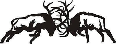 details  large  fighting bull elk  point antler