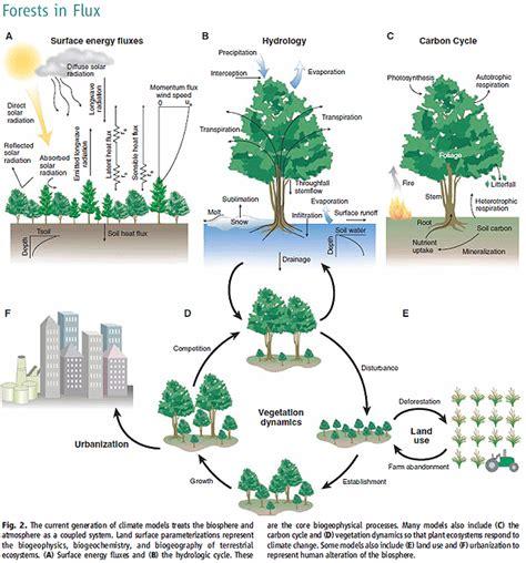 Rainforest Forest Ecosystem Diagram