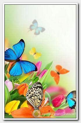 fondo animado de mariposas   android gratis