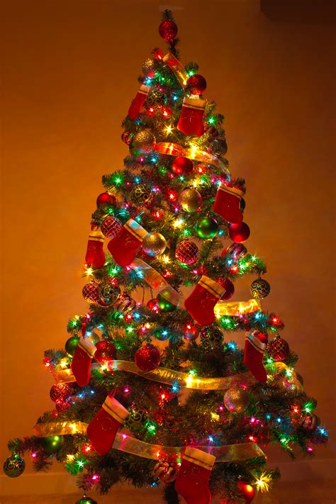 how to do christmas lights on trees big colored lights friday of advent iii community in