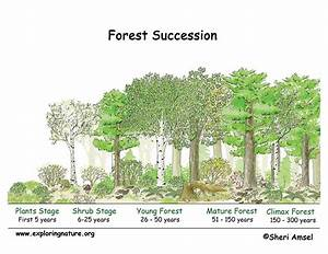 Plant Succession  U2013 Forestrypedia