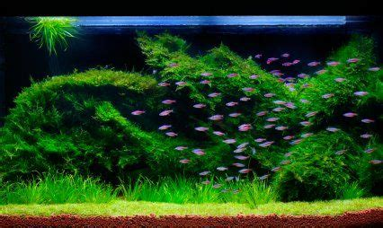 How To Set Up An Aquascape by 20 Reasons To Set Up Another Aquarium Features