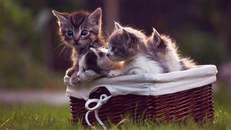 调皮可爱的猫咪图片桌面壁纸-壁纸下载-www.pp3.cn