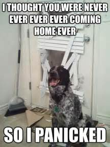 Best Pet Friendly Carpet by 25 Best Ideas About Funny Dog Memes On Pinterest Dog
