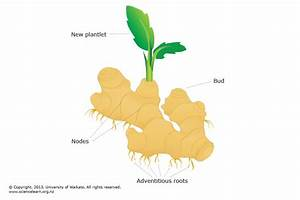 Diagram Of A Plant Bud Image collections - How To Guide ...