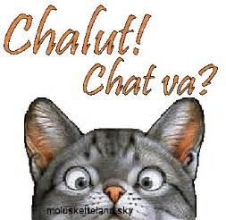 mon chat va souvent au toilette 13 chalut chat va molusketteland le pays du bidouillage