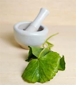 Gotu Kola  9 Powerful Benefits   Side Effects   Dosing