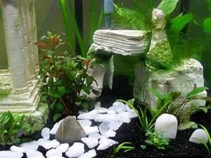 Idee Decoration Aquarium : photo id e d co aquarium gratuit ~ Melissatoandfro.com Idées de Décoration